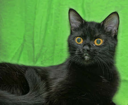 black cat with orange eyes Stock Photo - 13910240