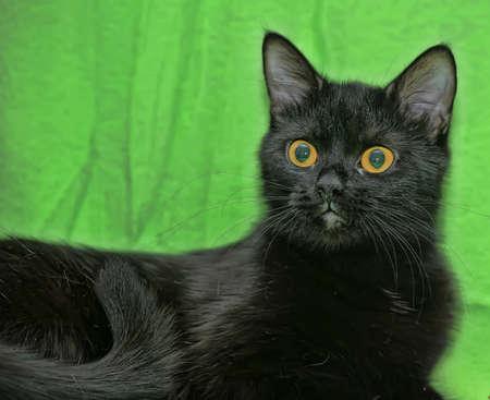 black cat with orange eyes Stock Photo - 13910240