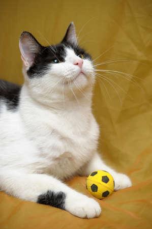 cat Stock Photo - 14195601