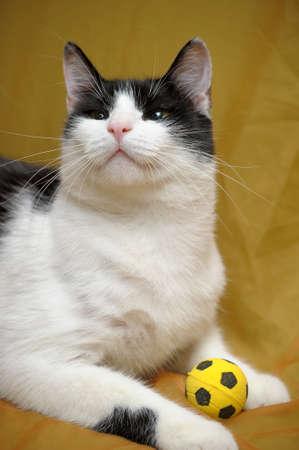 cat Stock Photo - 14195605