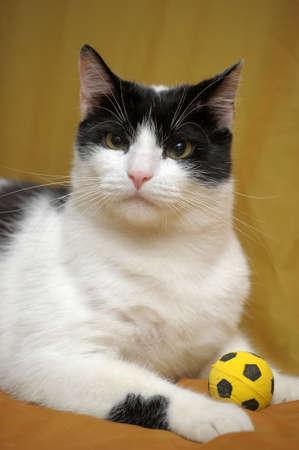 cat Stock Photo - 14195602