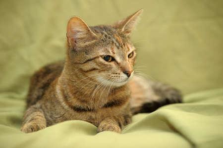 Portrait of a beautiful cat Stock Photo - 14403396