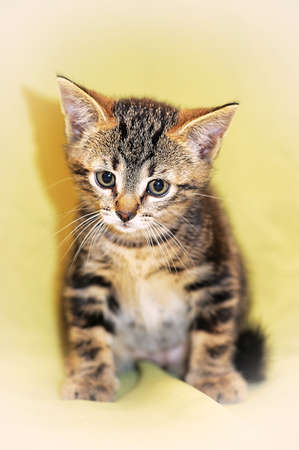 small striped kitten Stock Photo - 13910120