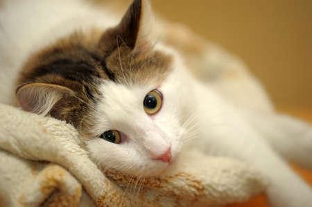 White and gray cat Stock Photo - 13953645