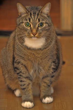 large striped cat photo