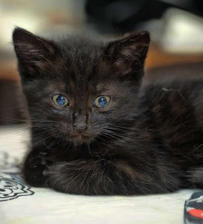 black kitten on a sofa
