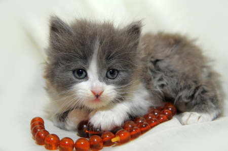 kitten with red beads photo