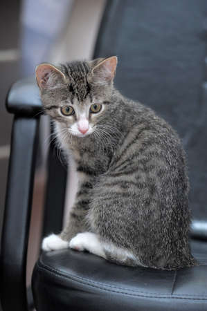 tabby kitten photo