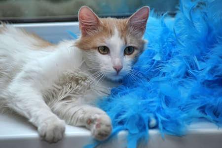 boas: bianco con il rosso gatto birichino