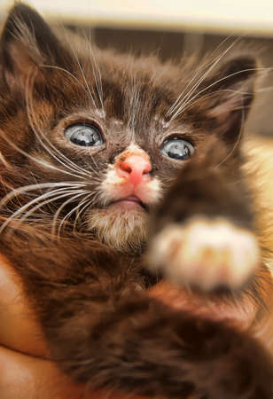 lesions: little sick kitten with big eyes Stock Photo