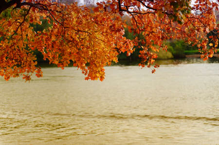 Autumn leaves over the river photo