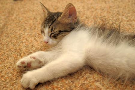 kitten photo