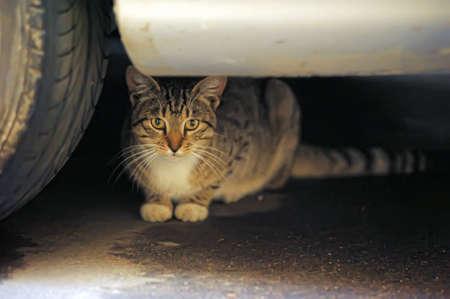 vagabond: homeless street cat Stock Photo