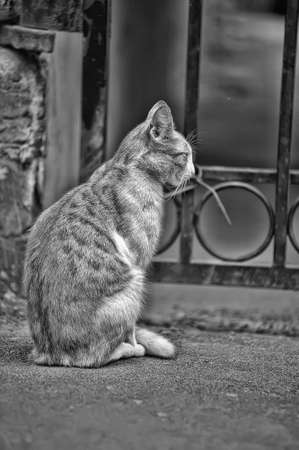 homeless street cat photo