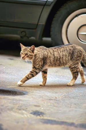 plainness: homeless street cat Stock Photo