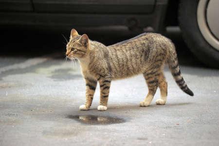 homeless street cat photo