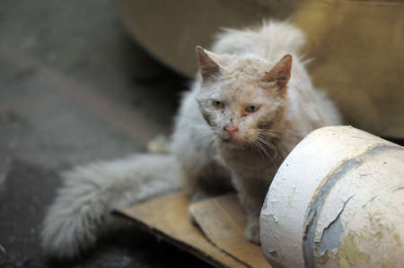 Another portrait of the miss fortune homeless animal Stock Photo - 14165801