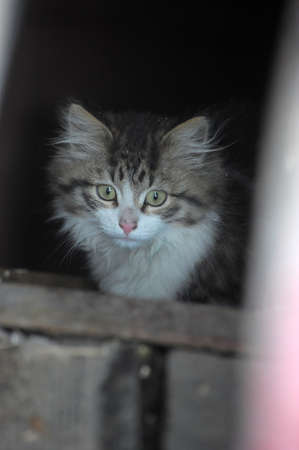 Homeless kitten photo
