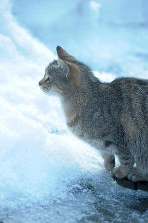 grievous: HOMELESS CAT Stock Photo