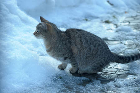 HOMELESS CAT photo