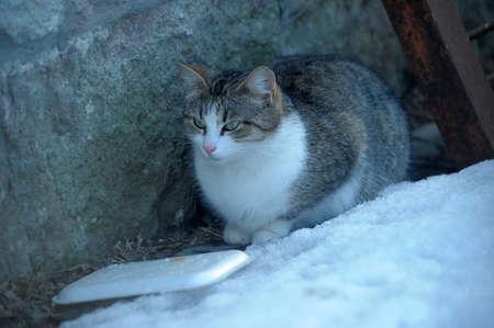 distressful: HOMELESS CAT Stock Photo