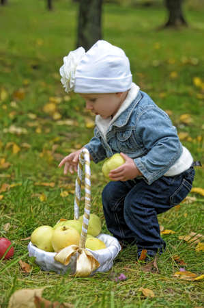 The little girl with a basket of apples  photo