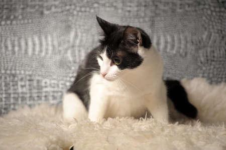 black and white cat Stock Photo - 14195619