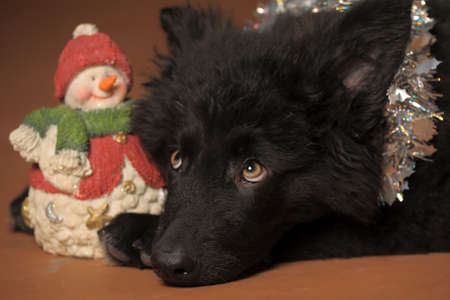 black puppy and snowman photo