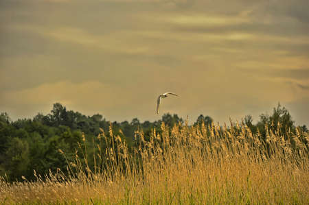 seagull flying over the field photo