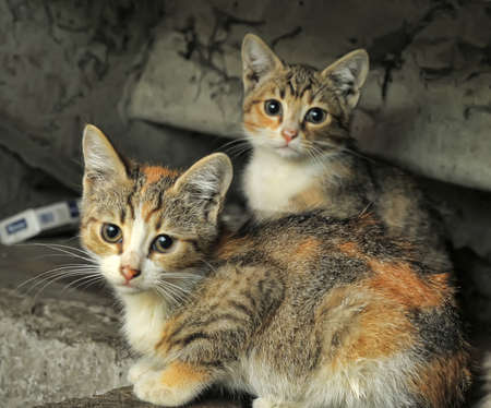 Two small accidents homeless kitten Stock Photo - 14273052