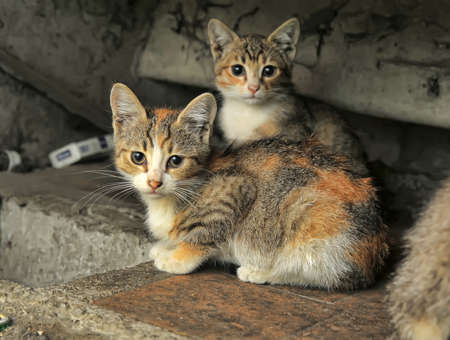 Two small accidents homeless kitten photo