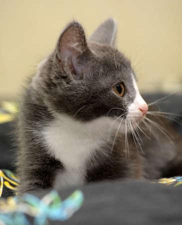 eyed kitten Stock Photo - 14305965