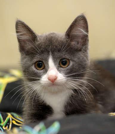 eyed kitten Stock Photo - 14305969