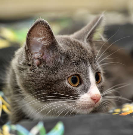 eyed kitten Stock Photo - 14305964