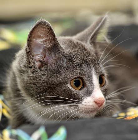 eyed kitten photo