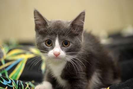 eyed kitten Stock Photo - 14305998