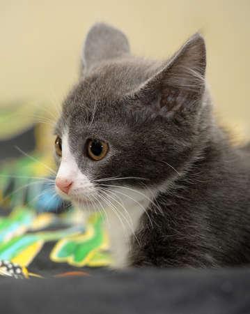 eyed kitten Stock Photo - 14305968