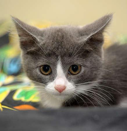 eyed kitten Stock Photo - 14305967