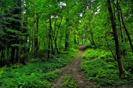 helechos: Rutas de senderismo en el bosque