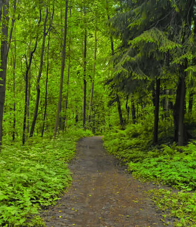 woodland path: Walking path in the forest Stock Photo