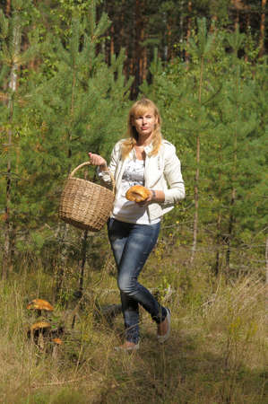 gathers: Woman gathers mushrooms in the basket Stock Photo