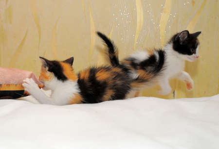 two kittens playing  Stock Photo - 14291141
