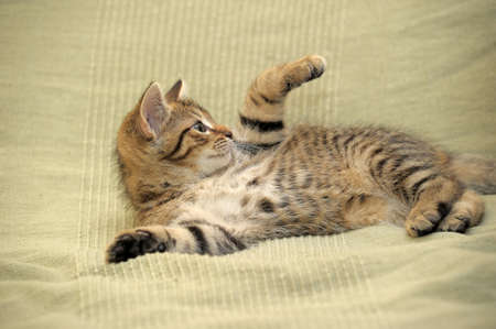 Cute Tabby Kitten Stock Photo - 14477649