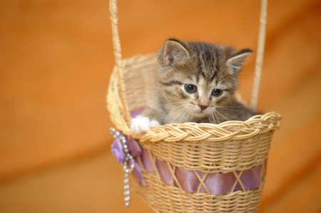 Kitten in a Basket Stock Photo - 14496403