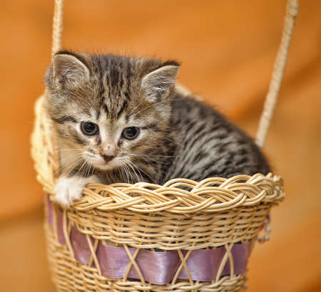 Kitten in a Basket Stock Photo - 14496400