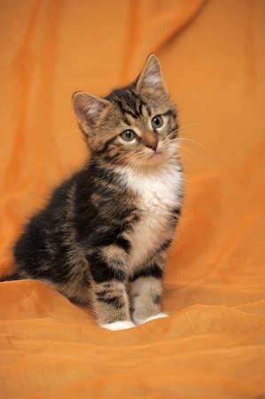 little fluffy tabby kitten Stock Photo - 14995421