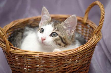 Kätzchen in einem Korb