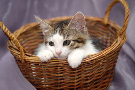 Kitten in a Basket Stock Photo - 14476633