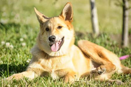 Red dog photo