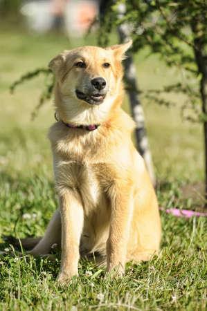 no correr: Red dog